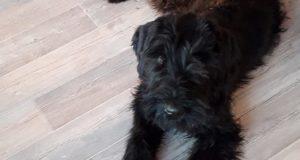 Wachhund Hugo